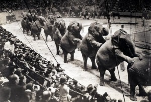Apparently circus elephants do forget when it comes to dancing to Stravinsky